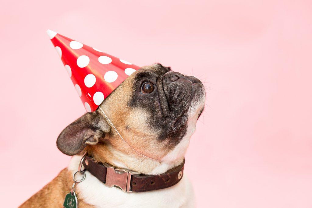 Celebrar fiesta de cumpleaños perro