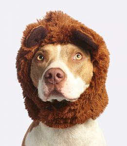 Disfraz cuqui para perro