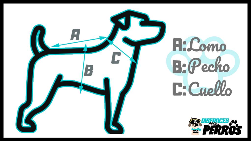 cómo medir a mi perro