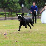 Perro en boda