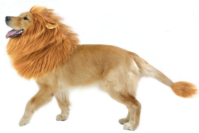 disfraz perro leon