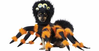 disfraz perro araña oferta