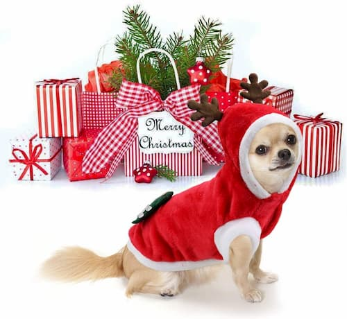 disfraz reno santa claus perro
