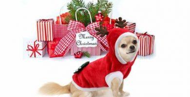 disfraz navidad para perro